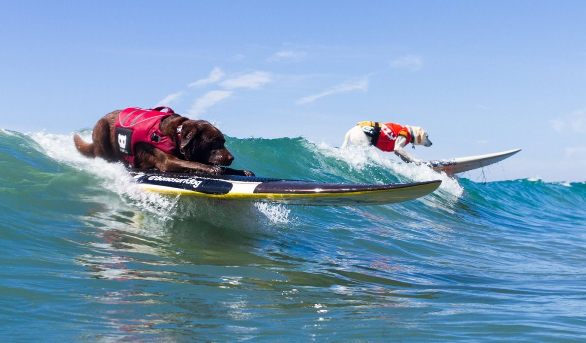 Dog surf le onde chiamano leomagazine official - Tipi di tavole da surf ...